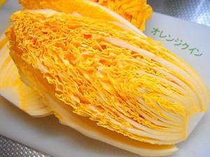 オレンジ白菜